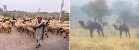 2015-03-28-1427581809-7013781-livestockmontage.jpg