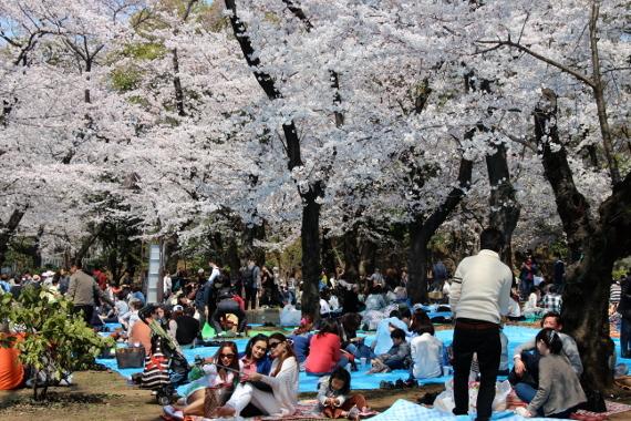 2015-03-30-1427722098-9153201-picnic1.JPG