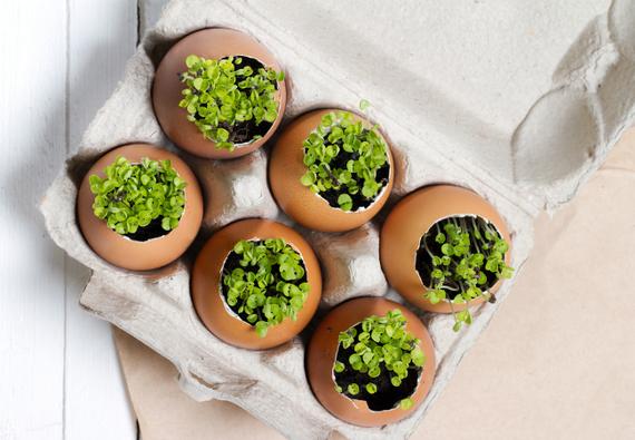 2015-04-03-1428079458-8105572-Eggshells_Planters.jpg