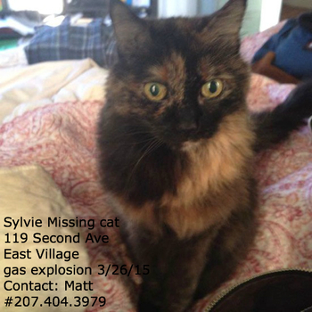 2015-04-03-1428087587-6052871-missing_cat_sylvie_east_village_gas_explosion_119_2nd_avenue_nyc.jpg