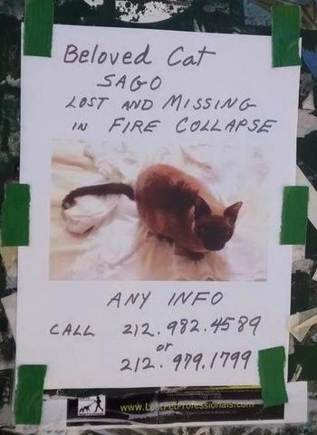2015-04-03-1428088180-221944-sago_missing_cat_east_village_explosion_nyc.jpg
