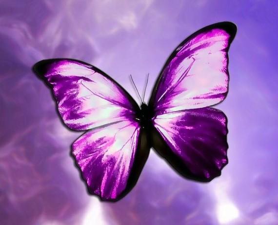 butterfly effect essay