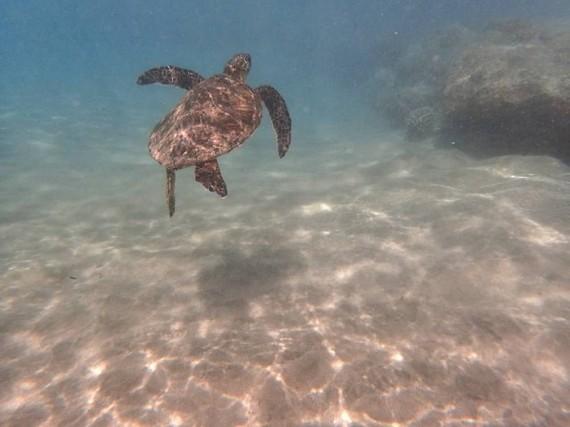 2015-04-06-1428333016-7486021-turtle.jpg