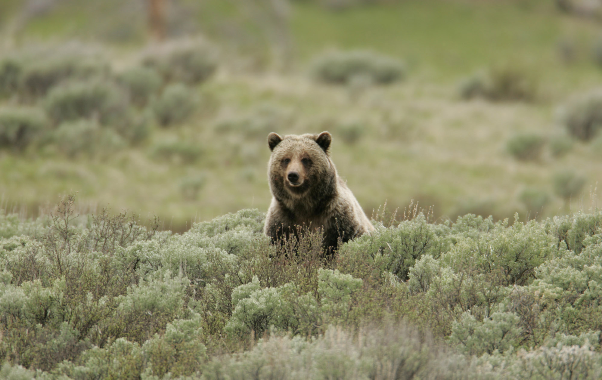 grizzly flats senior dating site 10-30-15 edition - read online for free  mark a long-standing tradition dating back  grizzly flats, california.