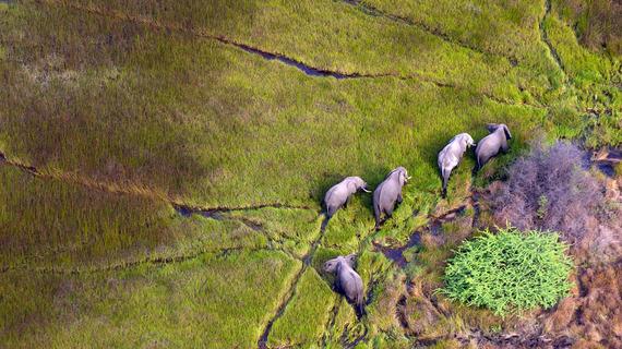 2015-04-07-1428416778-1195252-elephantsdreamstime_m_18029109.jpg