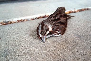 2015-04-07-1428422111-3445312-bird3.jpg