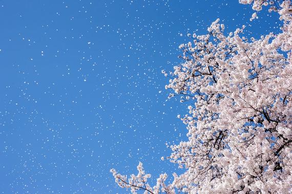2015-04-13-1428933577-9588810-blossoms_2.jpeg