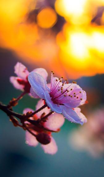 2015-04-13-1428933621-9155981-blossoms_4.jpeg