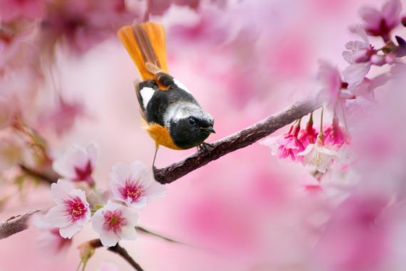 2015-04-13-1428933641-9716798-blossoms_5.jpeg