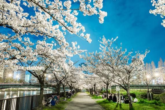2015-04-13-1428933663-869130-blossoms_6.jpeg