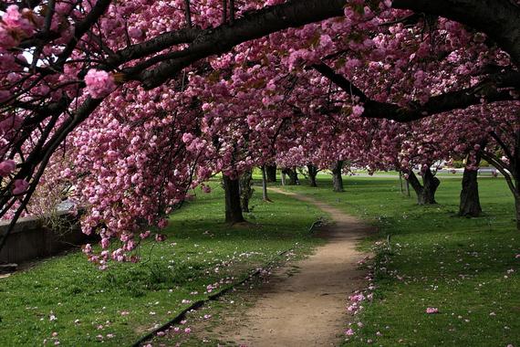 2015-04-13-1428933794-9772351-blossoms_10.jpeg