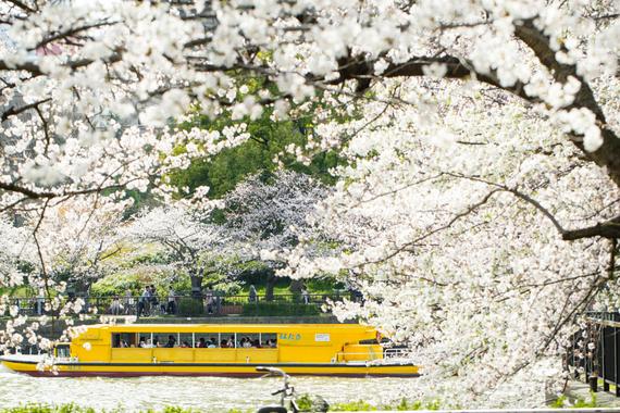 2015-04-13-1428933869-4809235-blossoms_12.jpeg
