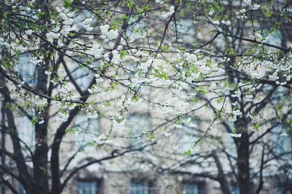 2015-04-13-1428933903-2472148-blossoms_13.jpeg