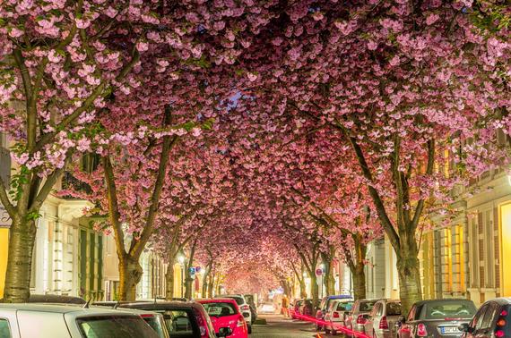 2015-04-13-1428934001-472590-blossoms_15.jpeg