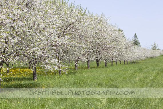 2015-04-13-1428934068-5535705-blossoms_16.jpeg