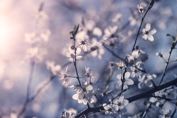 2015-04-13-1428934177-6104404-blossoms_17.jpeg