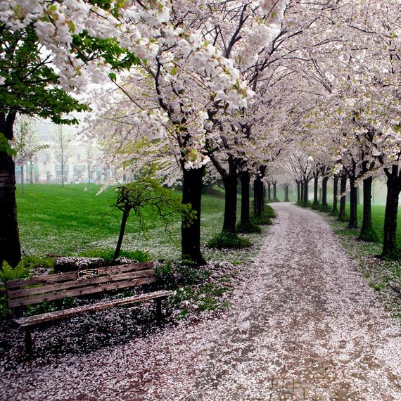 2015-04-13-1428934217-2498023-blossoms_18.jpeg