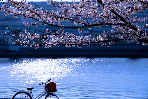 2015-04-13-1428934428-2152361-blossoms_19.jpeg