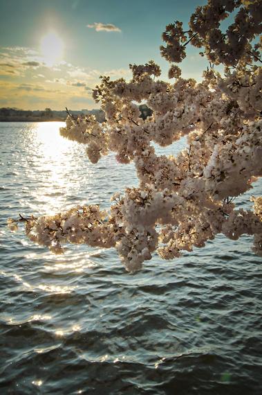 2015-04-13-1428934609-5731083-blossoms_20.jpeg