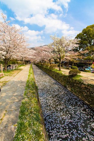 2015-04-13-1428934806-7708879-blossoms_24.jpeg