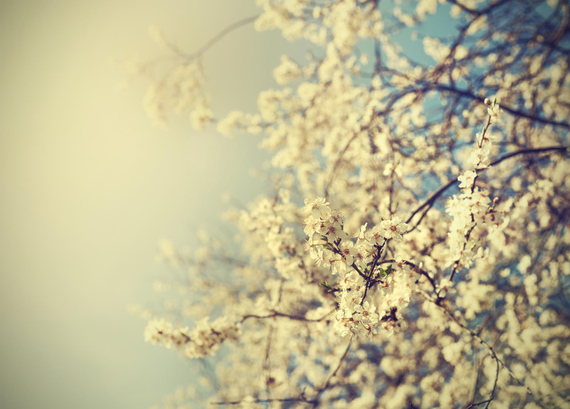 2015-04-13-1428934968-1587534-blossoms_25.jpeg