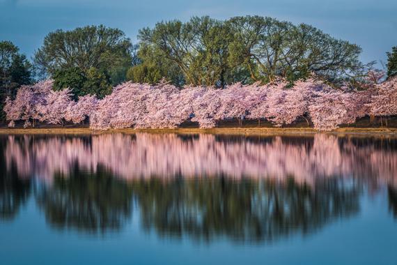 2015-04-13-1428934987-4819773-blossoms_26.jpeg