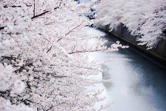 2015-04-13-1428935007-3915024-blossoms_27.jpeg