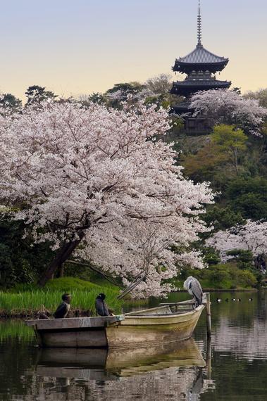 2015-04-13-1428935035-3293771-blossoms_28.jpeg
