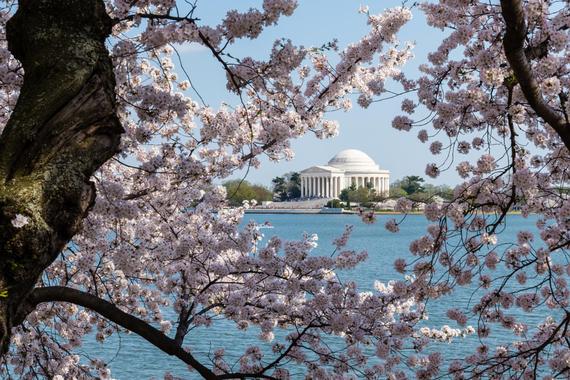 2015-04-13-1428935057-6183076-blossoms_29.jpeg