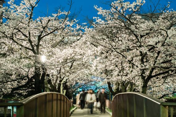 2015-04-13-1428935186-3148721-blossoms_30.jpeg