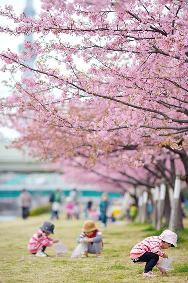 2015-04-13-1428935235-7628237-blossoms_32.jpeg