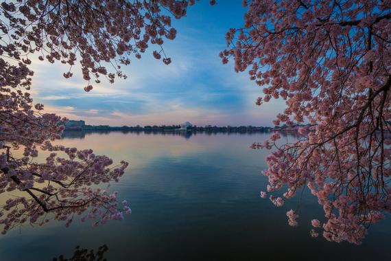 2015-04-13-1428935361-9487266-blossoms_34.jpeg