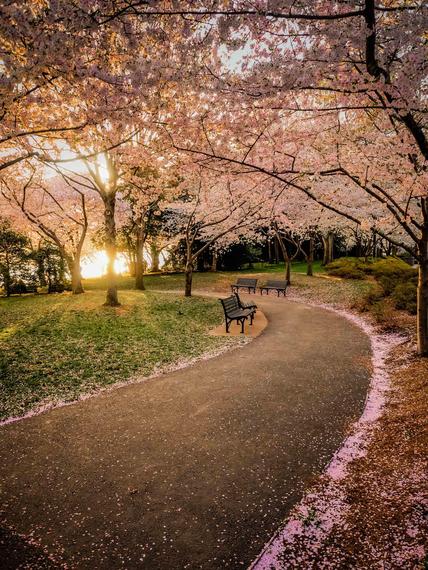 2015-04-13-1428935397-7740461-blossoms_35.jpeg