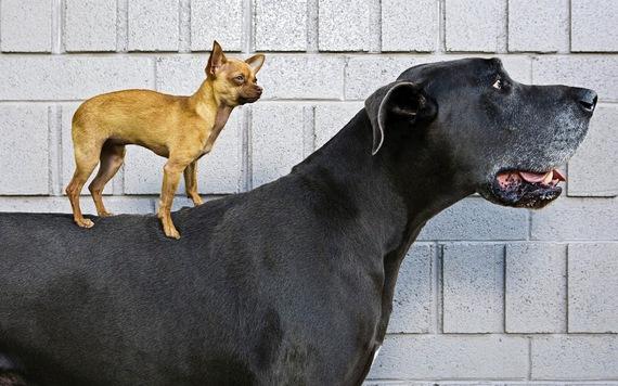 2015-04-15-1429102780-6945341-hddogwallpaperwithalittledogstandingonthebackofabigdoghdanimalbackgrounds.jpg