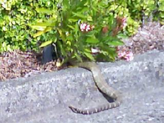 2015-04-19-1429468065-1170135-rattlesnake.jpg