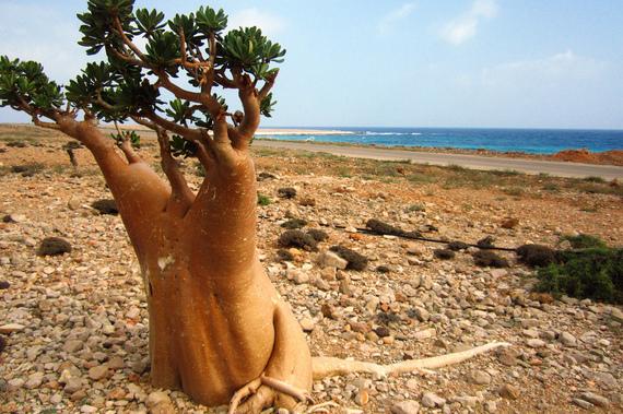 2015-04-21-1429620501-3198129-SocotraIsland.jpg