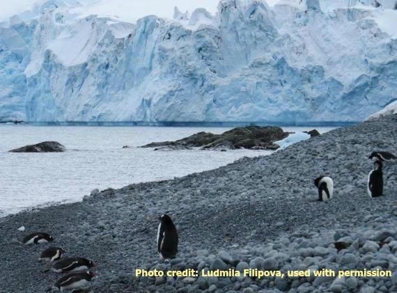 2015-04-21-1429642584-1676268-penguins.jpg