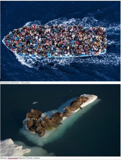 2015-04-23-1429768473-4393588-migrantsandwalrusesNB600x789.jpg