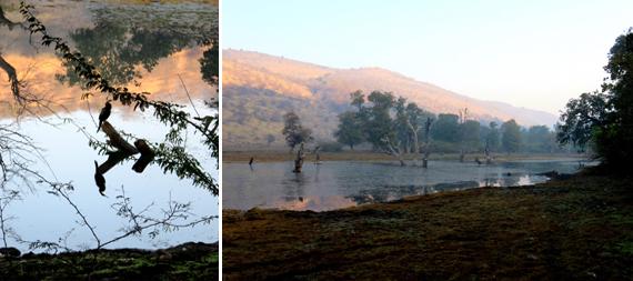 Impressions Of India Ranthambhore National Park Huffpost