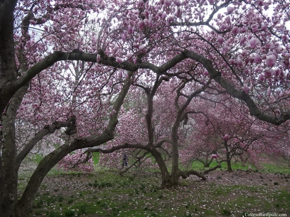 2015-04-26-1430056956-5213260-magnoliabliss_9.jpg