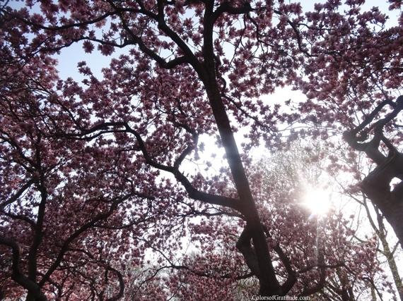 2015-04-26-1430057010-3585151-magnoliabliss_1.jpg