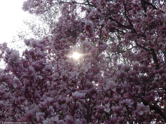2015-04-26-1430057043-4203131-magnoliabliss_2.jpg