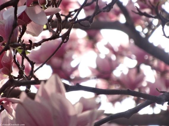 2015-04-26-1430057127-4110938-magnoliabliss_4.jpg