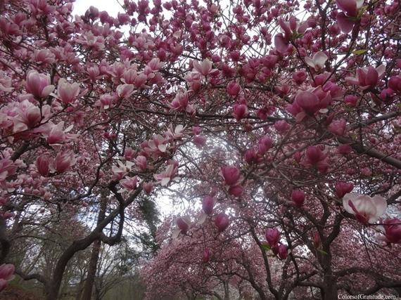 2015-04-26-1430057157-3010870-magnoliabliss_7.jpg