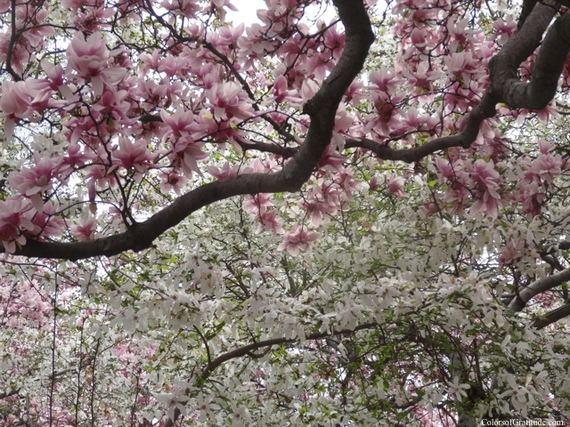 2015-04-26-1430057226-7907669-magnoliabliss_14.jpg