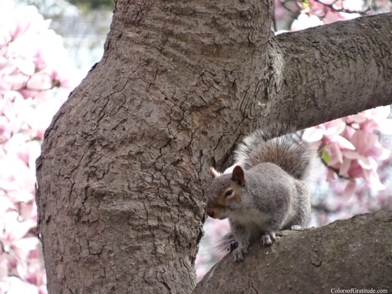 2015-04-26-1430057252-4229776-magnoliabliss_18.jpg