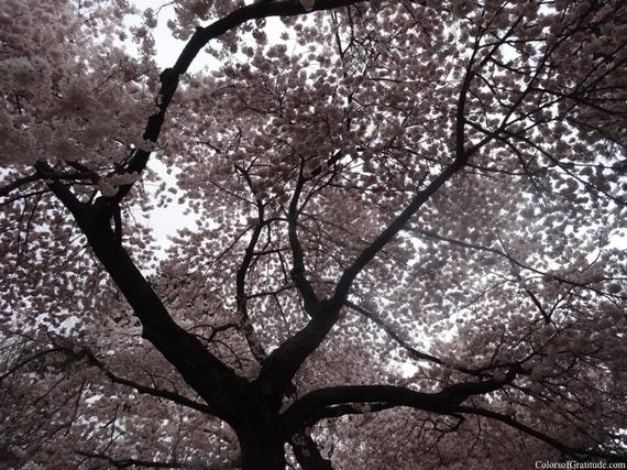 2015-04-26-1430057323-7890792-blossombliss_3.jpg