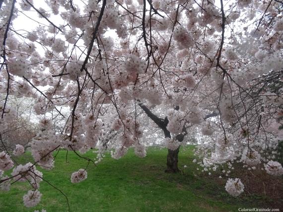 2015-04-26-1430057359-319096-blossombliss_5.jpg