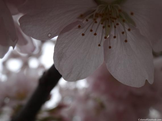 2015-04-26-1430057391-3984621-blossombliss_9.jpg