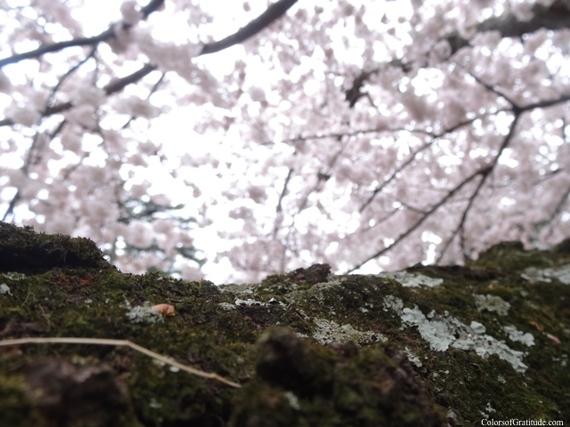 2015-04-26-1430057425-157645-blossombliss_10.jpg